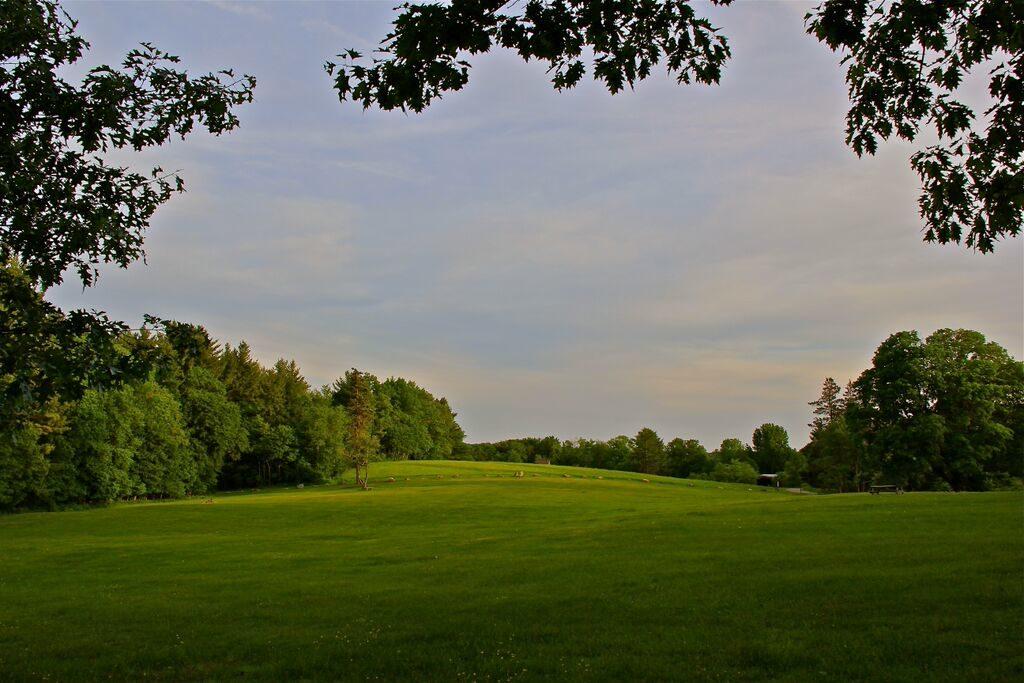 activity field 1