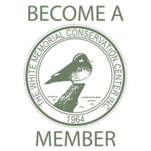 Library Membership