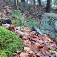 slab-meadow-trails