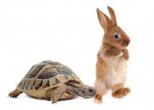 tortoise-hare-300x216