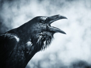 Raven: Bird, Myth, Legend with Mary Beth Kaeser and Gerri Griswold