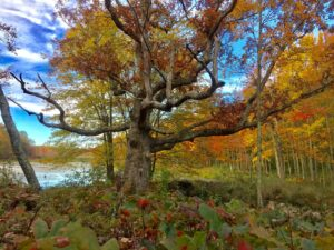 An Autumn Hike to Apple Hill and Cat Swamp with Gerri Griswold