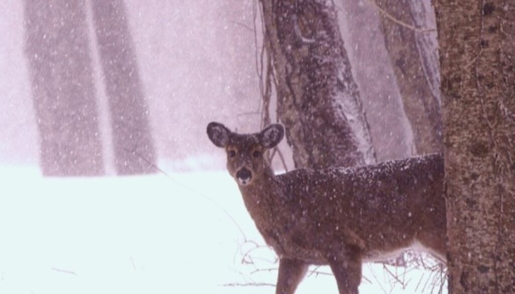 leo-snow-deer-winter-masthead-optimized