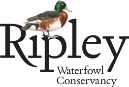 A Private Tour of the Ripley Waterfowl Conservancy