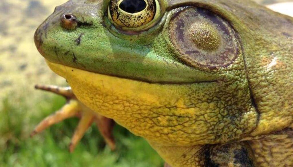 amphibian Amble (2)