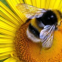 hm-pollen1051410