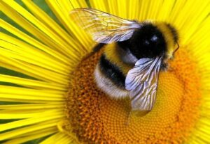 Planting for the Bees' Needs - Providing Habitat for a Diversity of Bees