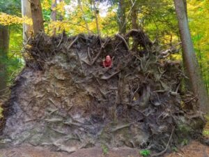 Looking Under Logs Together (Encore!) with Carrie Szwed, Education Director
