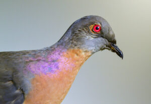 Nevermore: Remembering the Passenger Pigeon with Gerri Griswold