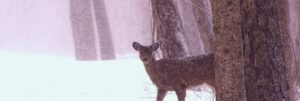 Wildlife in Winter, with Education Director Carrie Szwed