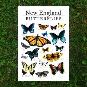 Amanda Surveski ~ New England Butterflies Print