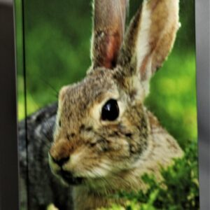 Cottontail Personal Journal