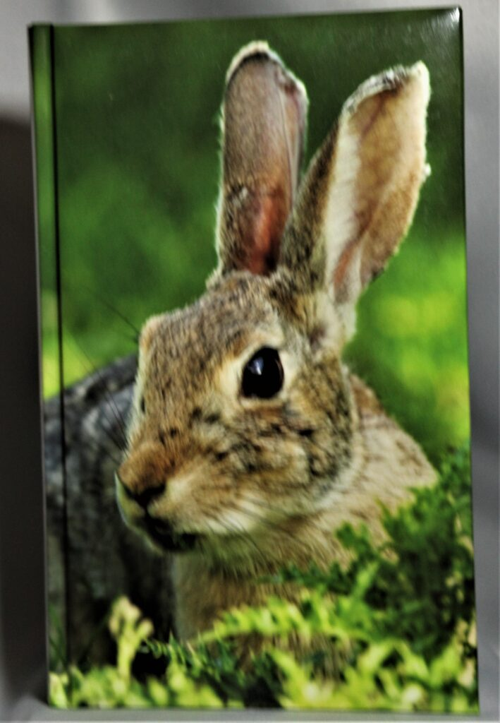 rabbit journal 2