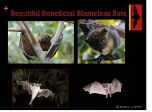Beautiful, Beneficial, Blameless Bats with Maureen Heidtmann