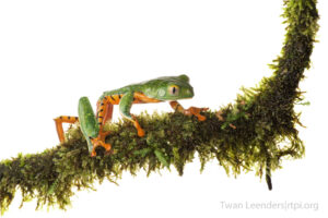 In Search of Lost Frogs with Twan Leenders, Roger Tory Peterson Institute of Natural History