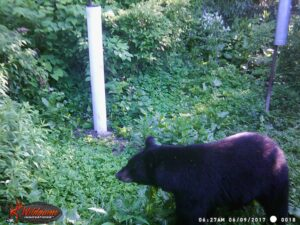 Camera Traps - A Great Way to Learn What Lives in Your Backyard!