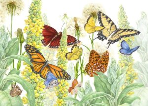 Litchfield Land Trust & The White Memorial Conservation Center Native Plants for Pollinators Sale