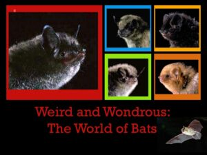 Weird and Wondrous: The Lives of Bats with Master Wildlife Conservationist Maureen Heidtmann