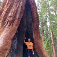 Tom at Sequoia